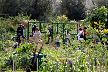 Marymoor Park community garden. Photo by King County Parks Your Big Backyard on Flickr (CC BY-NC-ND 2.0)